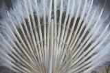 湖州羽毛扇